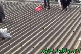 Thợ chống dột mái tôn tại quận 3 TP HCM